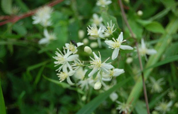 小菅村「花と緑の郷づくり」活動のご案内